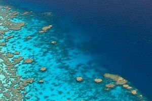 Must see experience: Great Barrier reef
